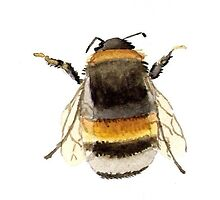 Bumble Bee by Clare Foley