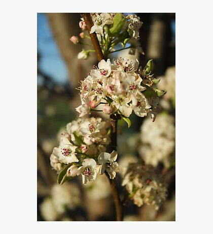 Late Bloomers Photographic Print