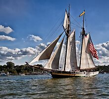 The pride of Baltimore by Kathy Weaver