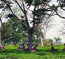 Tea pickers in a tea garden in Assam, India. by John Mitchell