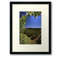 """Capel Vale Winery"" Margaret River, Western Australia Framed Print"