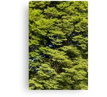 Time To Grow. Canvas Print