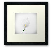A Calla Lily Sketch  Framed Print