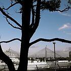 Anzac bridge, sydney by missmarbles