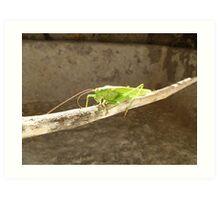 Clive the Grasshopper  Art Print