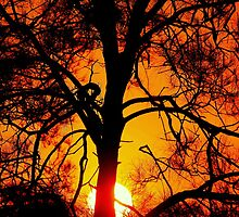 Flame tree - sunset at Nudgee Beach by GeoffSporne