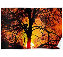 Flame tree - sunset at Nudgee Beach Poster