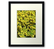 Summer Bloom. Framed Print