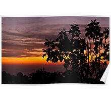 Sunrise with poinsettias Poster