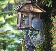 Squirrel In Our Bird Feeder by Jonice
