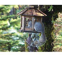 Squirrel In Our Bird Feeder Photographic Print