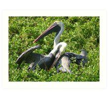 Brown Pelicans: A Romantic Moment Art Print