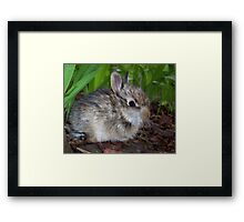 Sweet Baby Bunny Framed Print