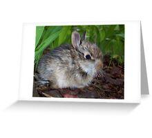 Sweet Baby Bunny Greeting Card