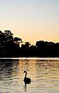 Swan On The Torrens by Richard Owen