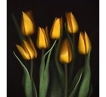 Autumn Tulips Photographic Print