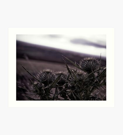 Thistles in The Peak District Art Print