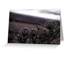 Thistles in The Peak District Greeting Card