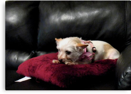 """""""Queen of the Couch""""... prints and products by © Bob Hall"""