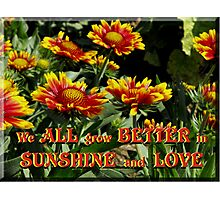 We all grow better in Sunshine and Love  Photographic Print