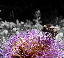 Busy Little Thistle Bee by Pinhead Industries