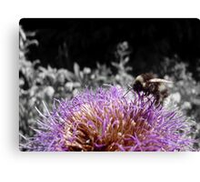 Busy Little Thistle Bee Canvas Print