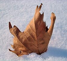Leaf in the snow,when autumn meets the winter by robertpatrick