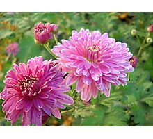 Pink flowers. Photographic Print