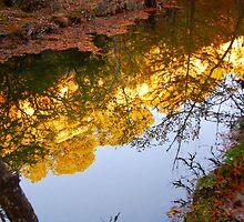 Reflections at Hamilton Pools by ijam357
