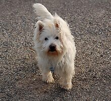 My dog crumb-13 by trainmaniac