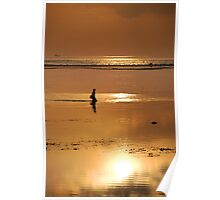 Seaweed gatherer at dawn, Bali, Indonesia Poster