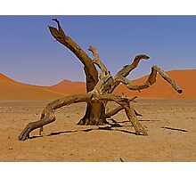 desert gladiators Photographic Print