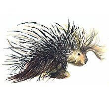 Coldprickly, a children's book story and illustration Photographic Print