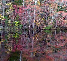 Canton, New Jersey USA Pond Peak Color by Kim McClain Gregal