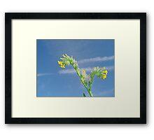 Desert Wildflower against Contrail Sky Framed Print
