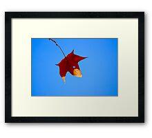 Maple Leaf in Fall Framed Print