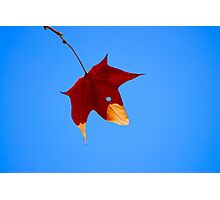 Maple Leaf in Fall Photographic Print