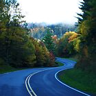 Winding Road by Terry Best
