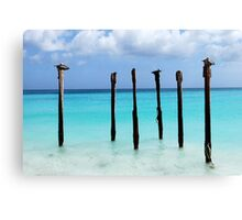 Pelicans' Roost Canvas Print