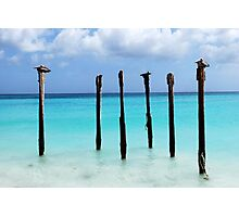 Pelicans' Roost Photographic Print