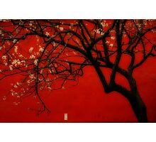China Red [Orton] Photographic Print