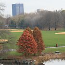 View of the Park by CMCetra