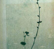 Ikebana by Elena Ray