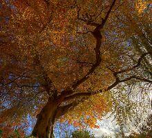 Belvoir Forest Tree from Below by Gerard1972