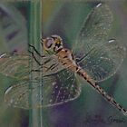 A Little Dragonfly Magic by louisegreen