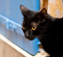 Cat at the window by Cvail73