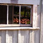 Pumpkins in the Window by peterrobinsonjr