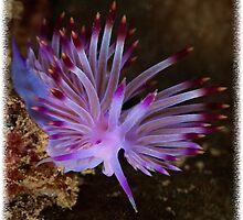 Flabellina Rubrolineata by Ross Gudgeon