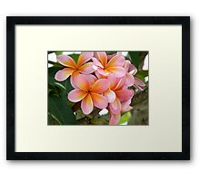 Frang time, aorbflowers,  Framed Print