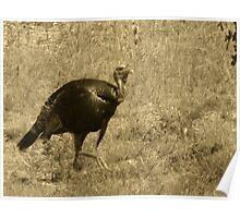 Mr. Turkey Poster